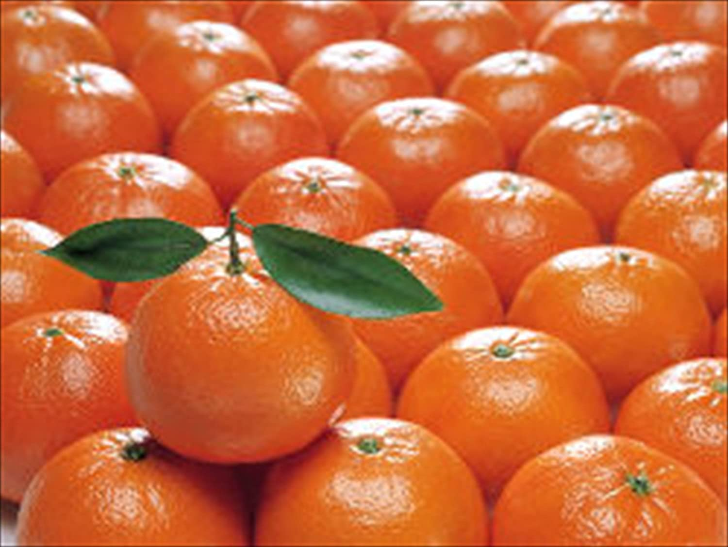 Organic Mountain Clementines
