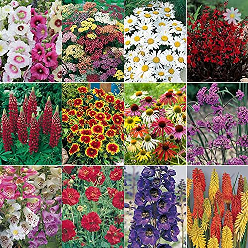 Complete-Cottage-Garden-Perennial-Plug-Plant-Collection-24-Pieces