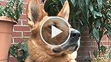 VIRAL DOG! Ahhhhhhhhhhhhh!!!