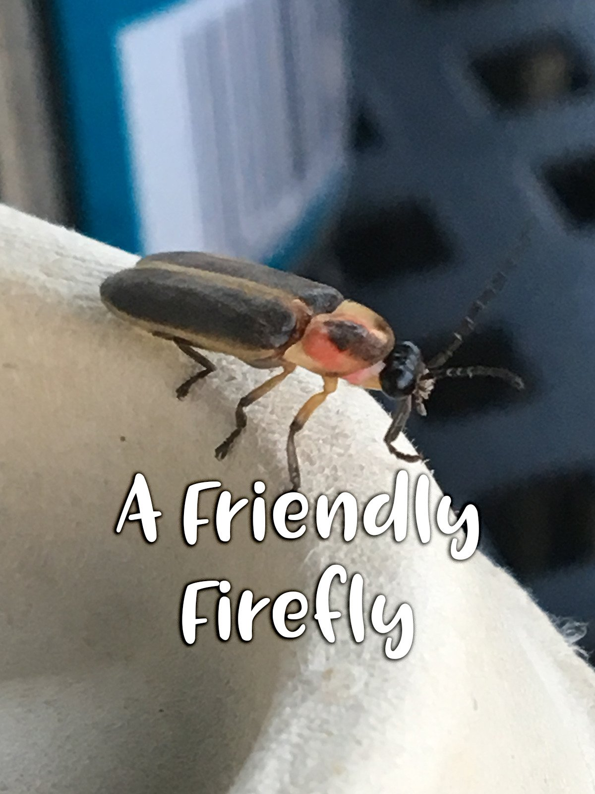 A Friendly Firefly on Amazon Prime Instant Video UK