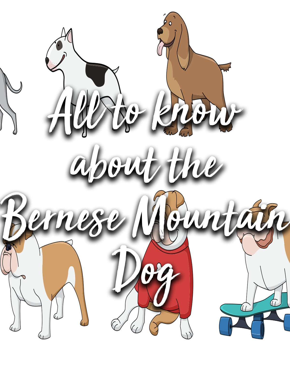 All to know about the Bernese Mountain Dog