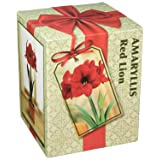 Amaryllis Red Lion Holiday Gift Growing Kit. Includes: Big Red Lion Bulb, plastic pot and saucer, and Professional Growing Medium