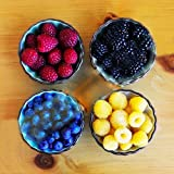Best Garden Seeds 4 kinds of color 4000 PCS Rare Raspberry seeds (1000 blue, 1000 black, 1000 red, 1000 yellow) delicious fruit plants seeds