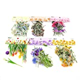 Molshine 240pcs PET Transparent Decorative Stickers -Flowers Plant Series Decals for DIY,Personalize,Bullet Diary Decoration,Laptops,Scrapbook,Luggage,Cars,Books -6 Packs of Different Styles (Color: Flowers Plant Series)