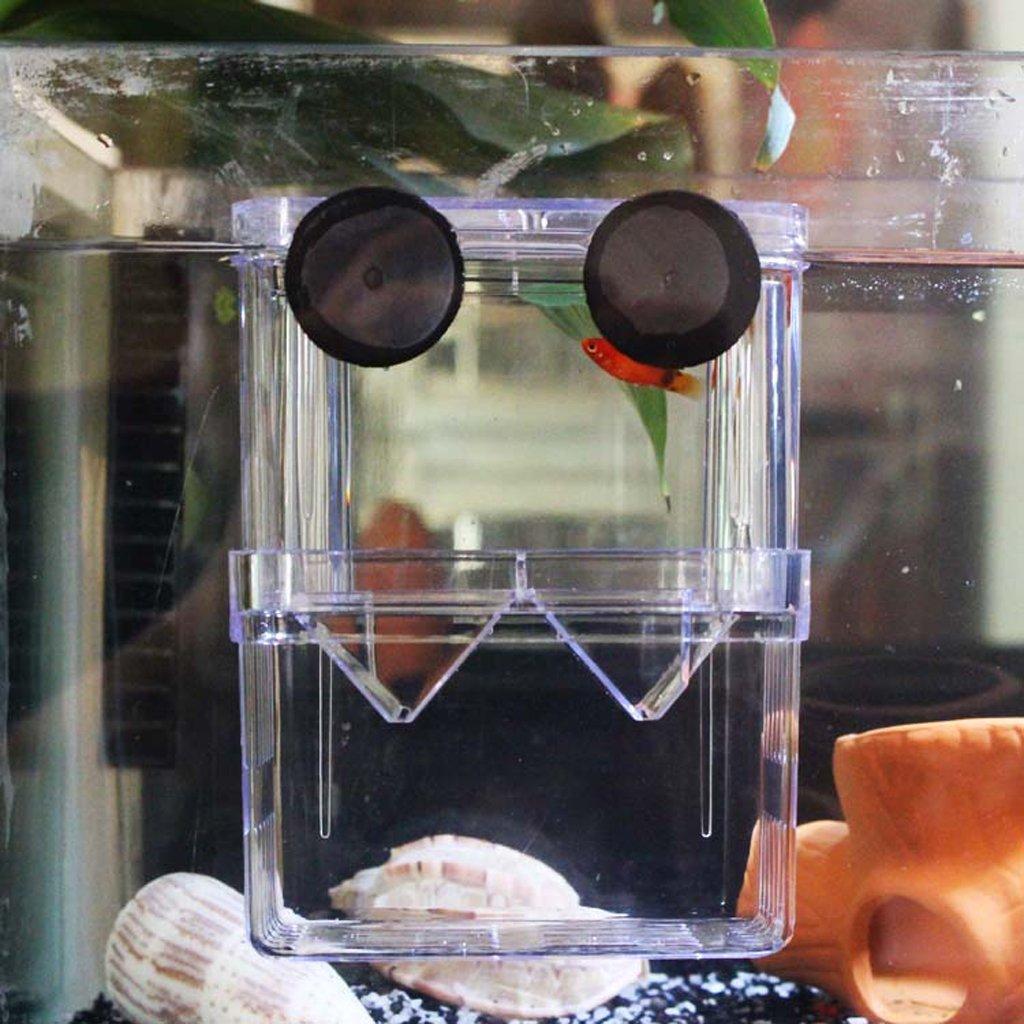 Aquarium fish tank fry net breeder breeding hatchery - Imported Aquarium Fish Breeding Incubator Floating Fish Hatchery Fry Trap Breeder Box Amazon In Pet Supplies