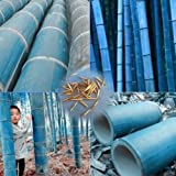 Wintefei 50Pcs Rare Blue Bamboo Seeds Beautiful Home Garden Decorative Tree Herb Plant
