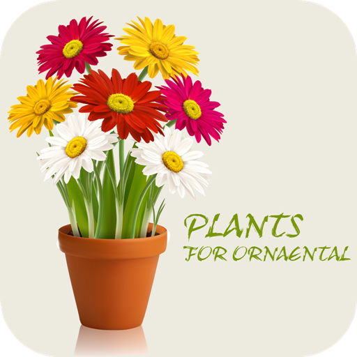 decorative-flowers-and-plants-an-illustrated-explanation-of-floriculture