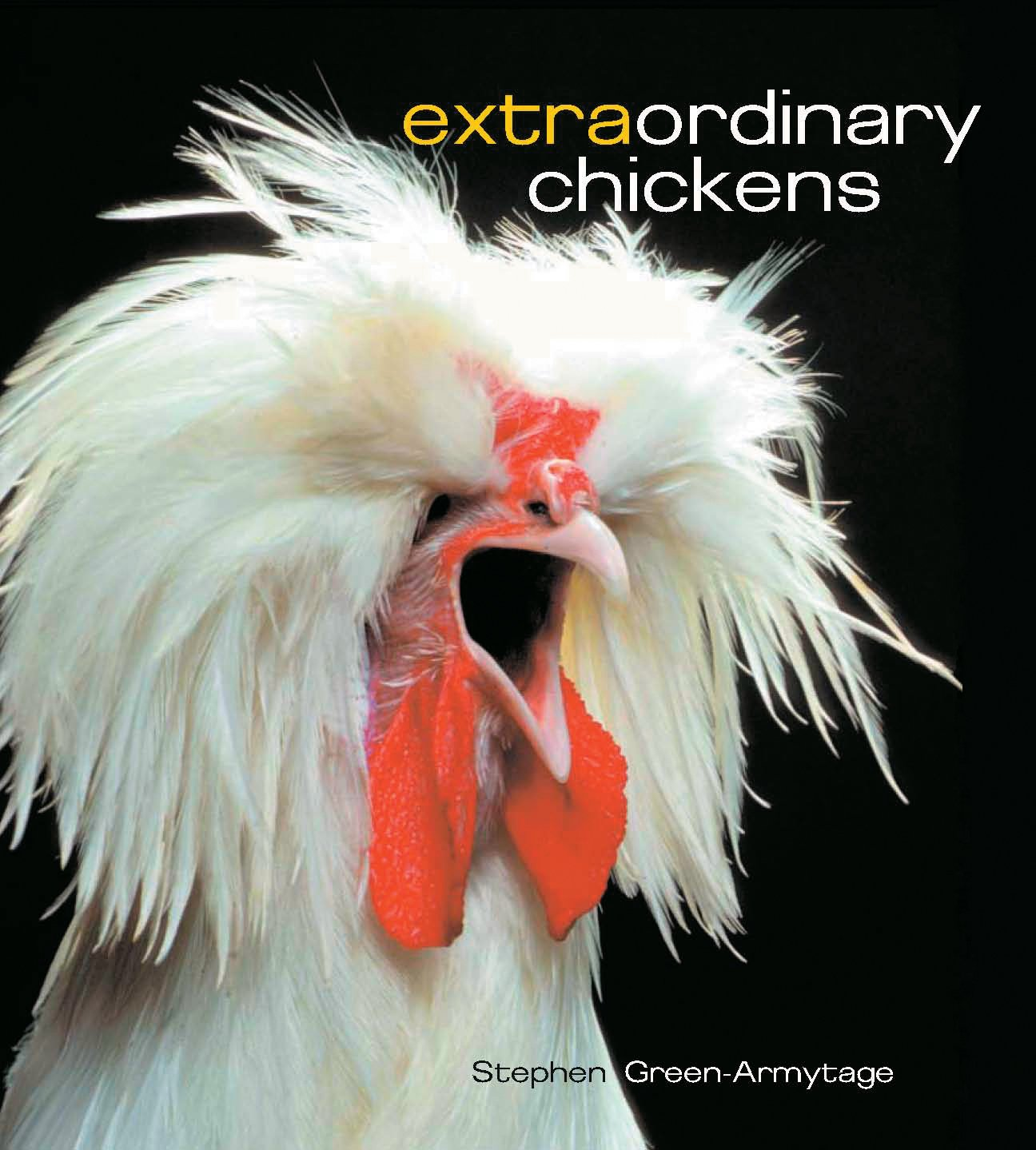 Extraordinary Chickens! It looks like I just found Adam Duritz's pet chicken.