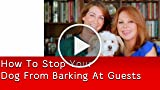 How To Stop Your Dog From Barking At Guests, from...