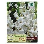 Kraft Seeds Kraft Seeds Gladiolus Flower Bulbs White By Kraft Seeds)