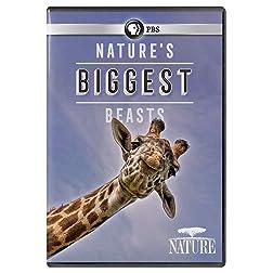 NATURE: Nature's Biggest Beasts DVD