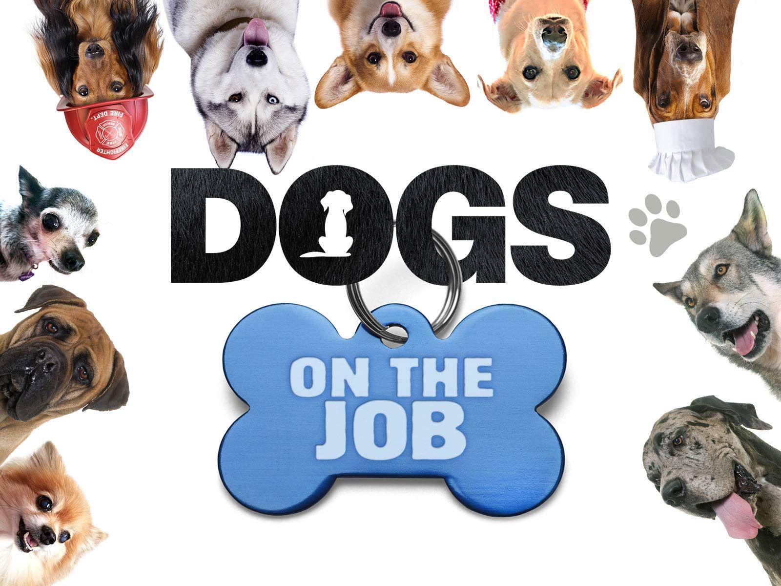 Dogs on the Job - Season 1