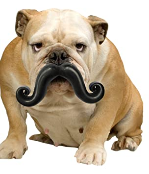 Moody Pet Stache Toy Dog