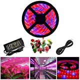 ABelle LED Strip Light Plant Grow Lights 16.4ft 5050 SMD Waterproof Full Spectrum Red Blue 4:1 Growing Lamp for Aquarium Greenhouse Hydroponic Plant Garden Flowers (5 M) (Color: Red and Blue 4:1, Tamaño: 16.4ft with 6A Adapter)