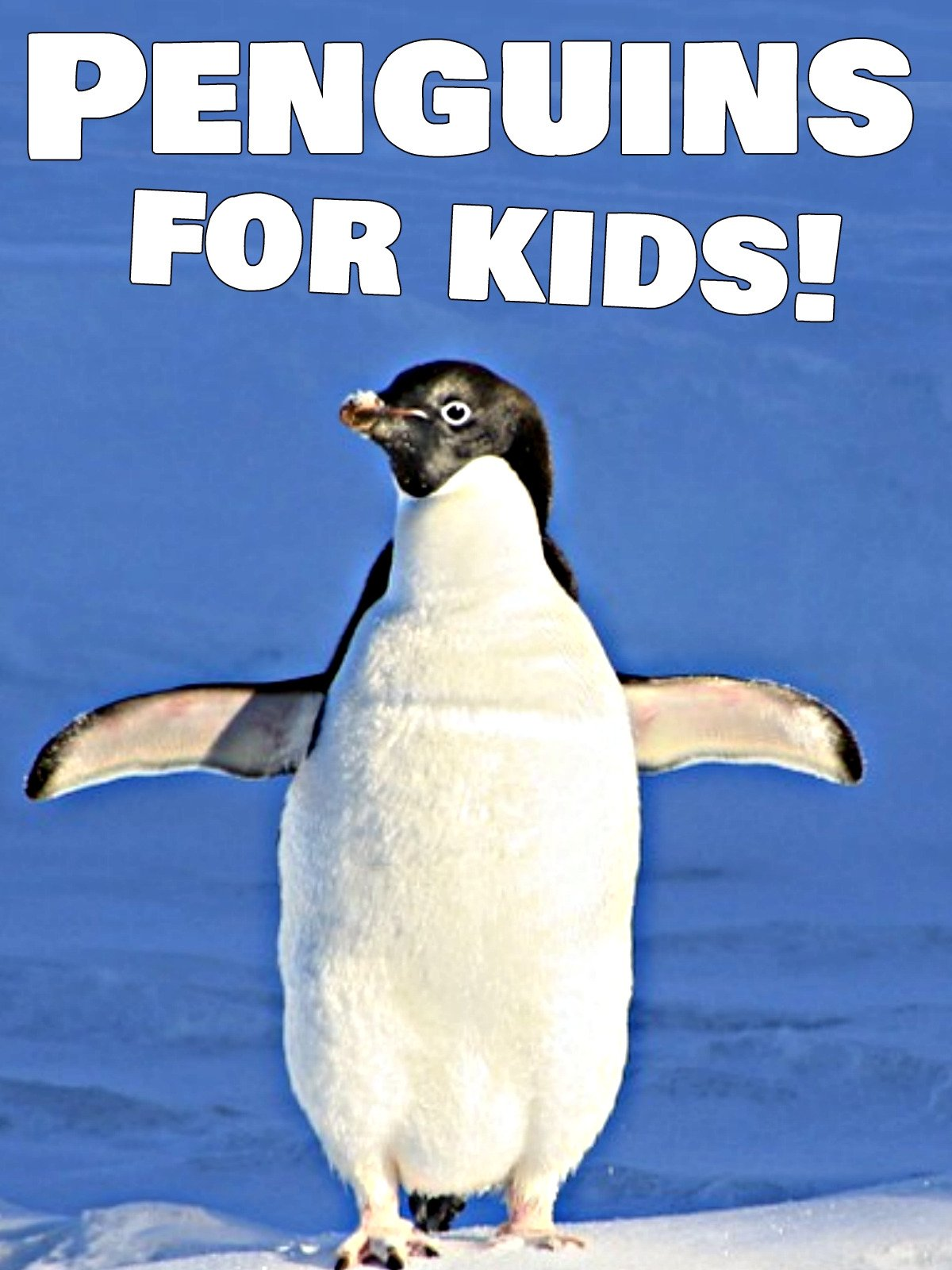Penguins for Kids!