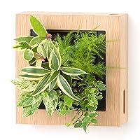 壁に掛ける観葉植物ミドリエデザイン 木製フレーム