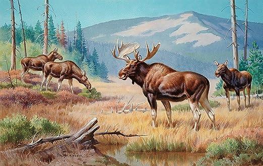 Bull moose wallpaper - photo#10