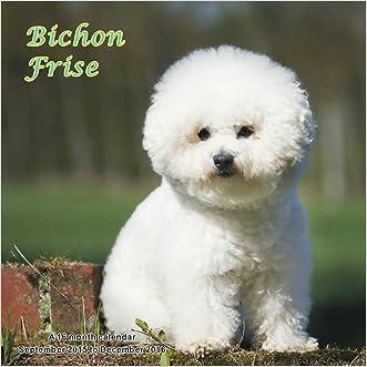 Bichon Frise Calendar - 2016 Wall calendars - Dog Calendars - Monthly Wall Calendar by Magnum
