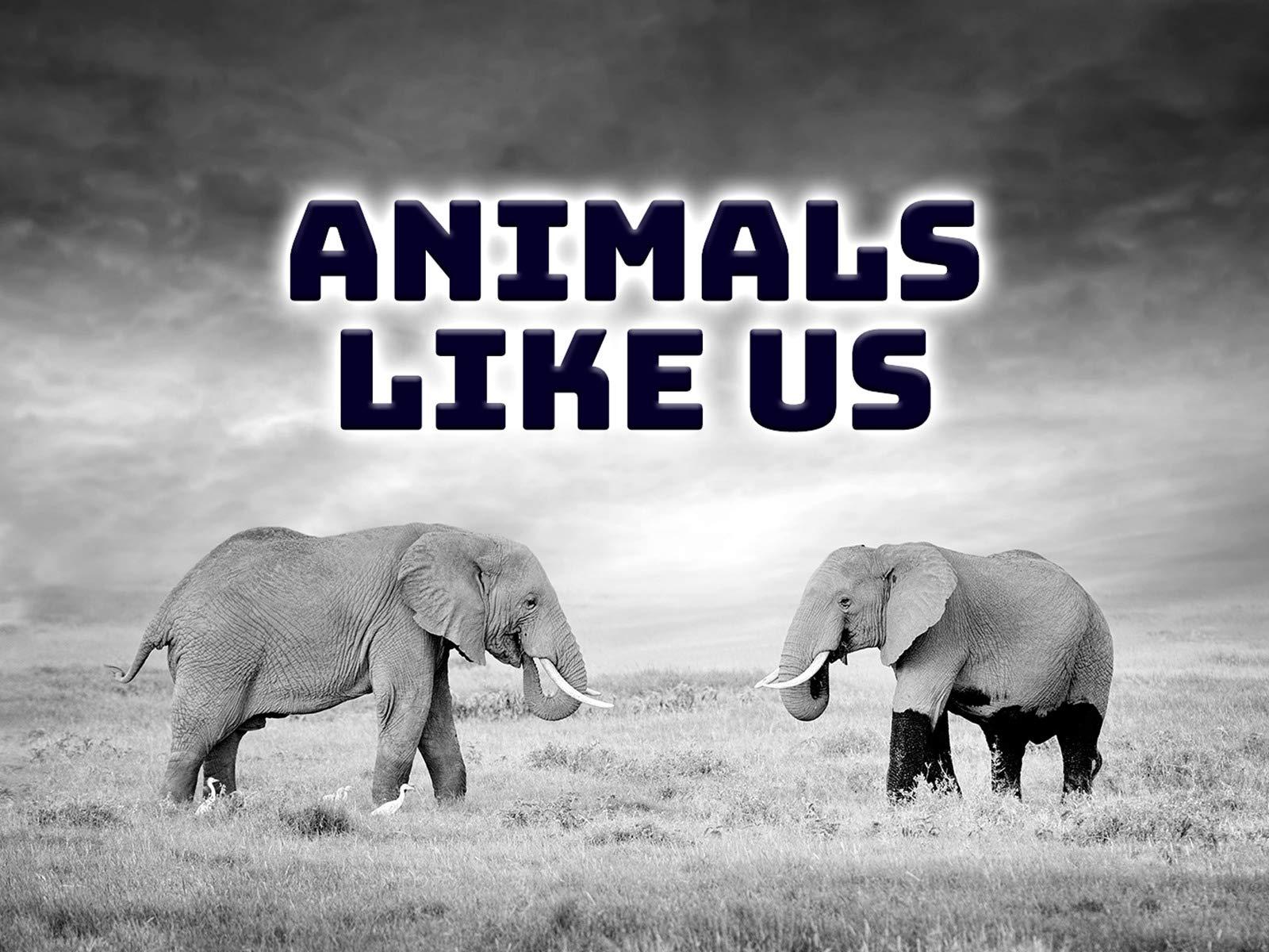 Animals Like Us - Season 1