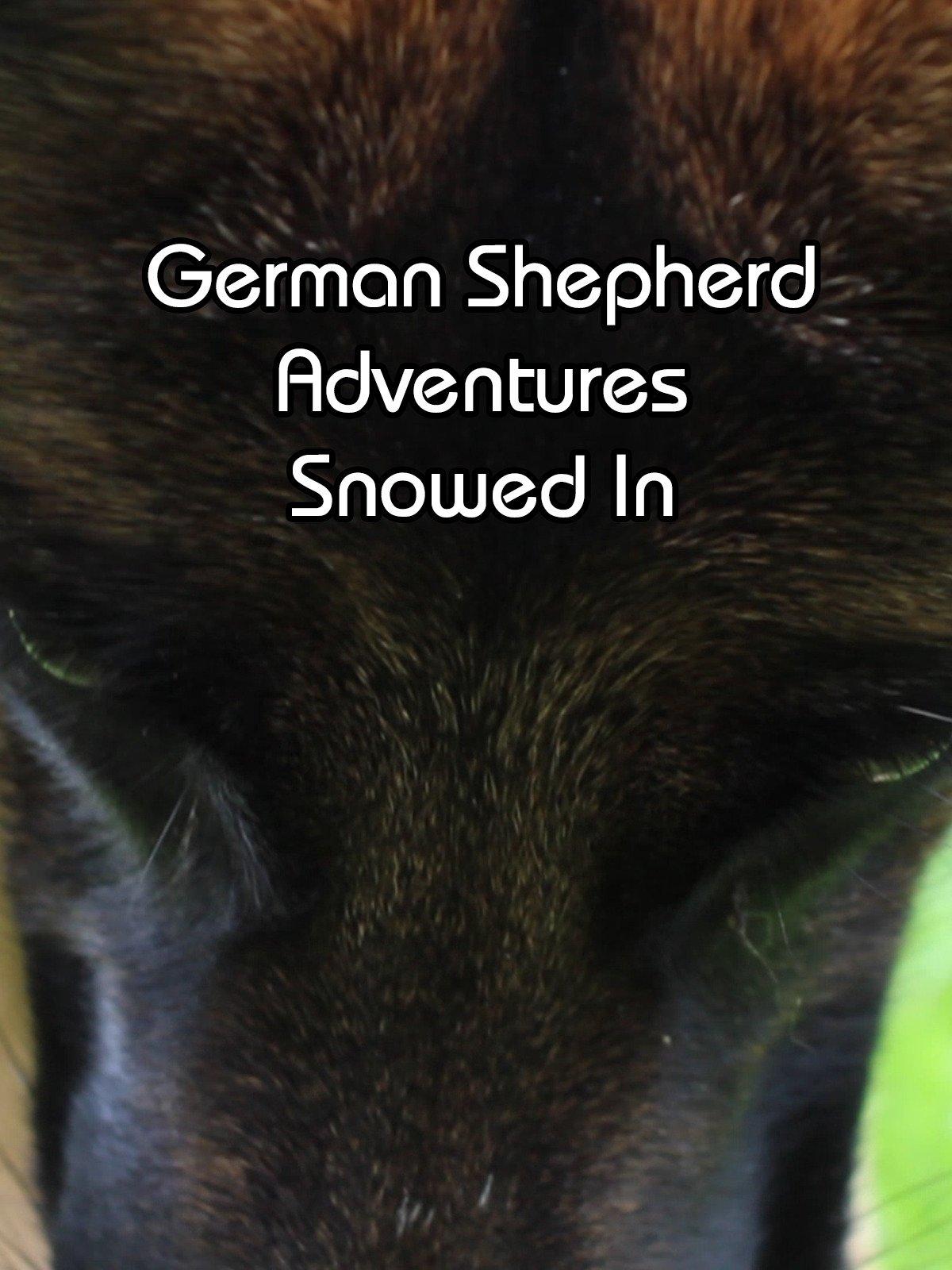German Shepherd Adventures Snowed In