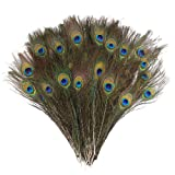 DECORA 100 Pieces Real Natural Peacock Feathers for Craft Halloween Costume Bridesmaid Corsage Christmas Wreath and Home Decor 10 Inch-12 inch (Color: Ag002s1p100)