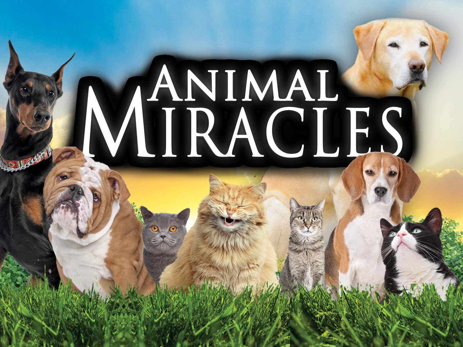 Animal Miracles - Season 1