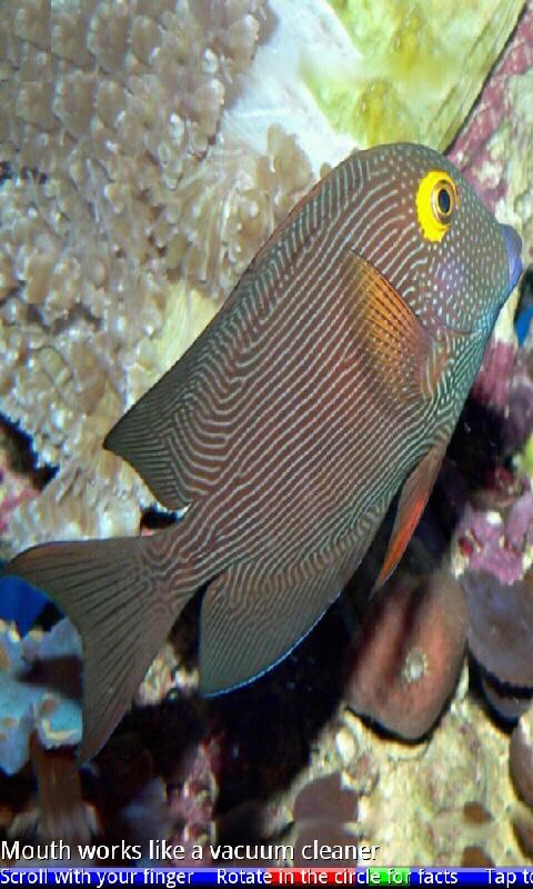 Marine aquarium fish 1 app shop per android for Amazon aquarium fish