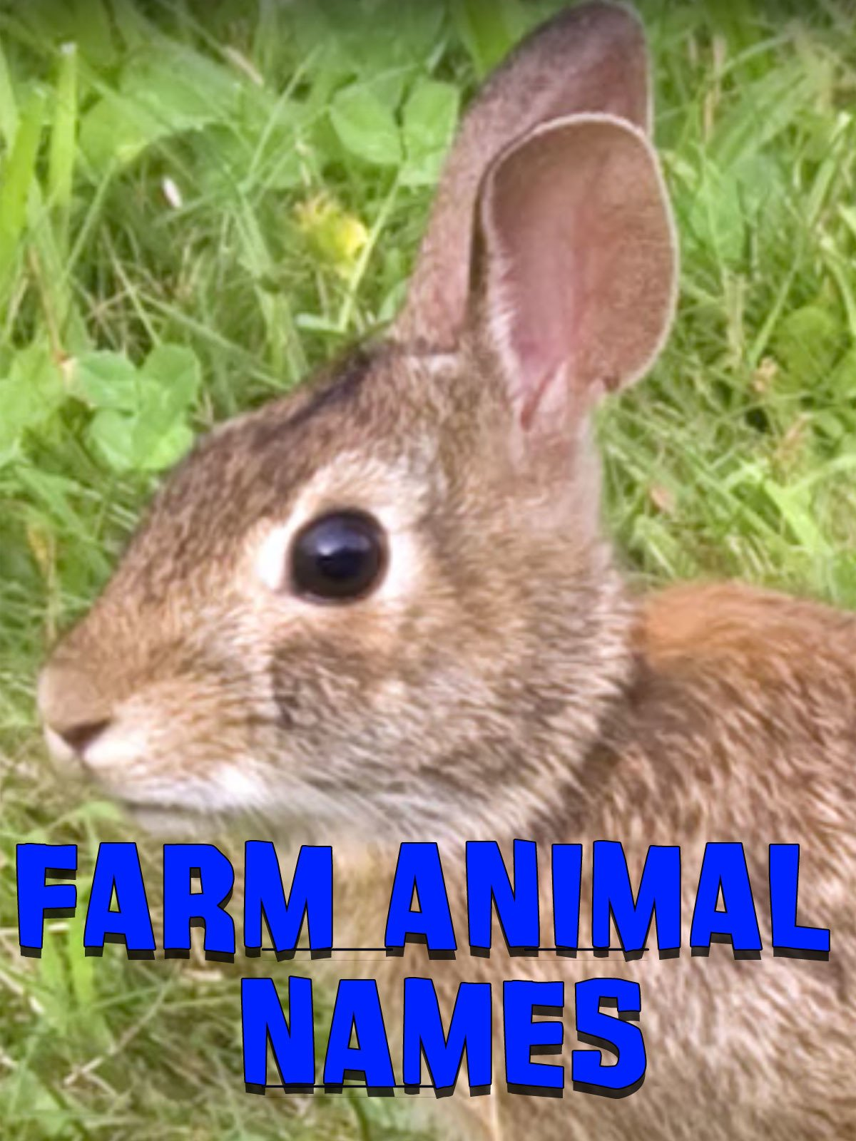 Farm Animal Names
