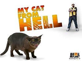 My Cat From Hell Season 7