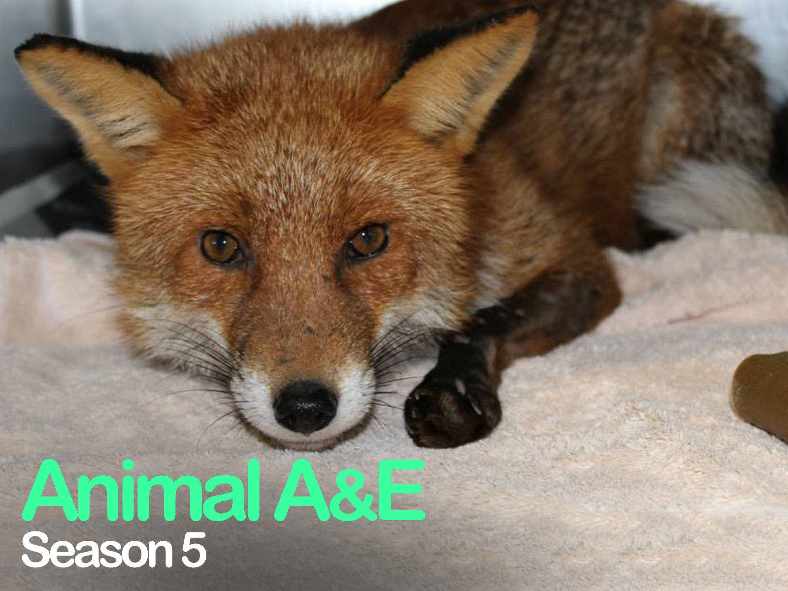 Animal A&E: Animal Rescue - Season 5