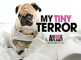 My Tiny Terror Season 1