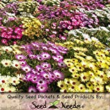 """2,500 Seeds, Ice Plant """"Annual Mixture"""" (Dorotheanthus bellidiformis) Seeds By Seed Needs"""