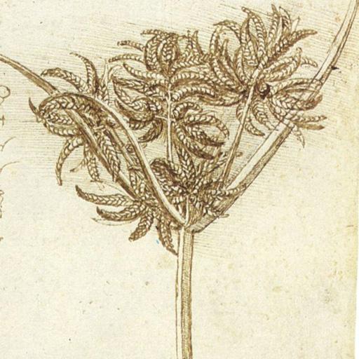 81-magickal-and-healing-herbs