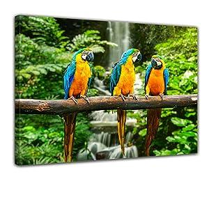 Bilderdepot24 Leinwandbild BlauGelber Macaw Papagei 120x90cm  fertig gerahmt, direkt vom Hersteller    Überprüfung und Beschreibung