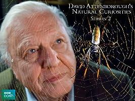 David Attenborough's Natural Curiosities, Season 2