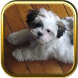 Shih Tzu Dogs Jigsaw Puzzle Games