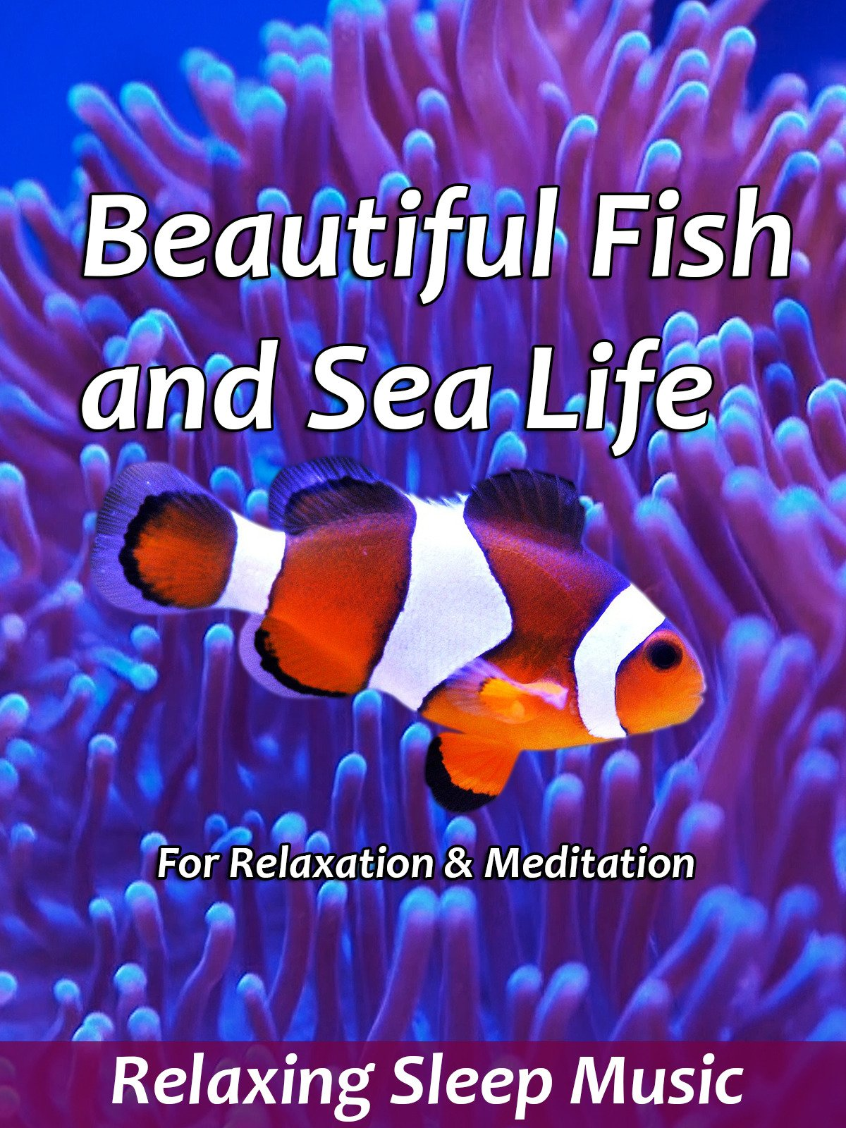 Beautiful Fish and Sea Life for Relaxation & Meditation