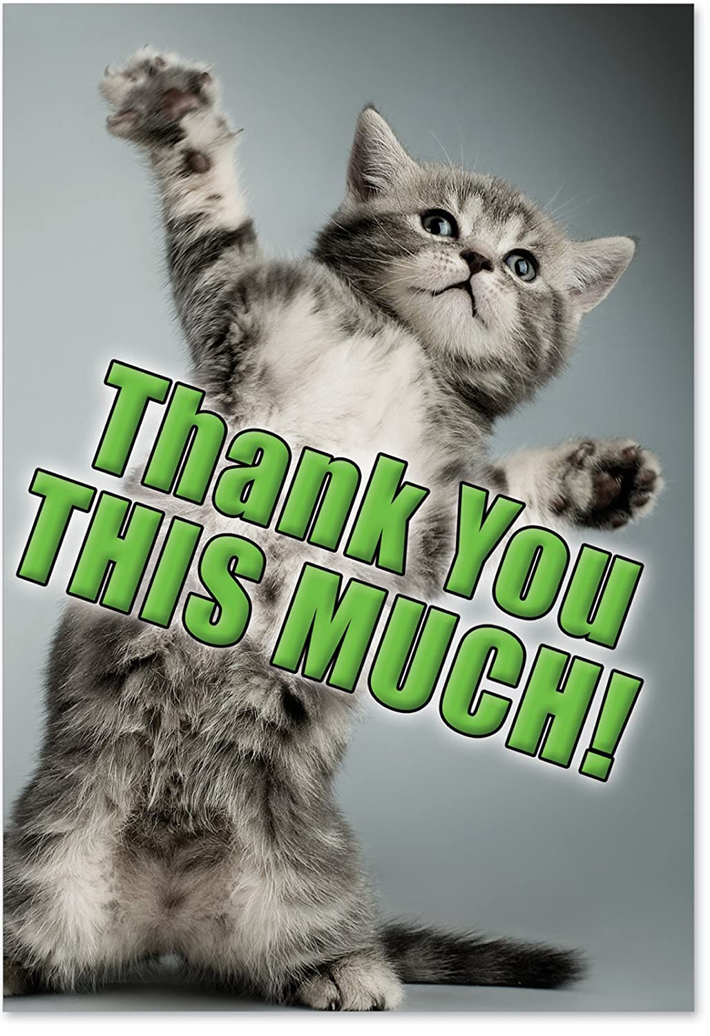 Amazon - Kitten Hilarious Thank You This Much Greeting Card - Free