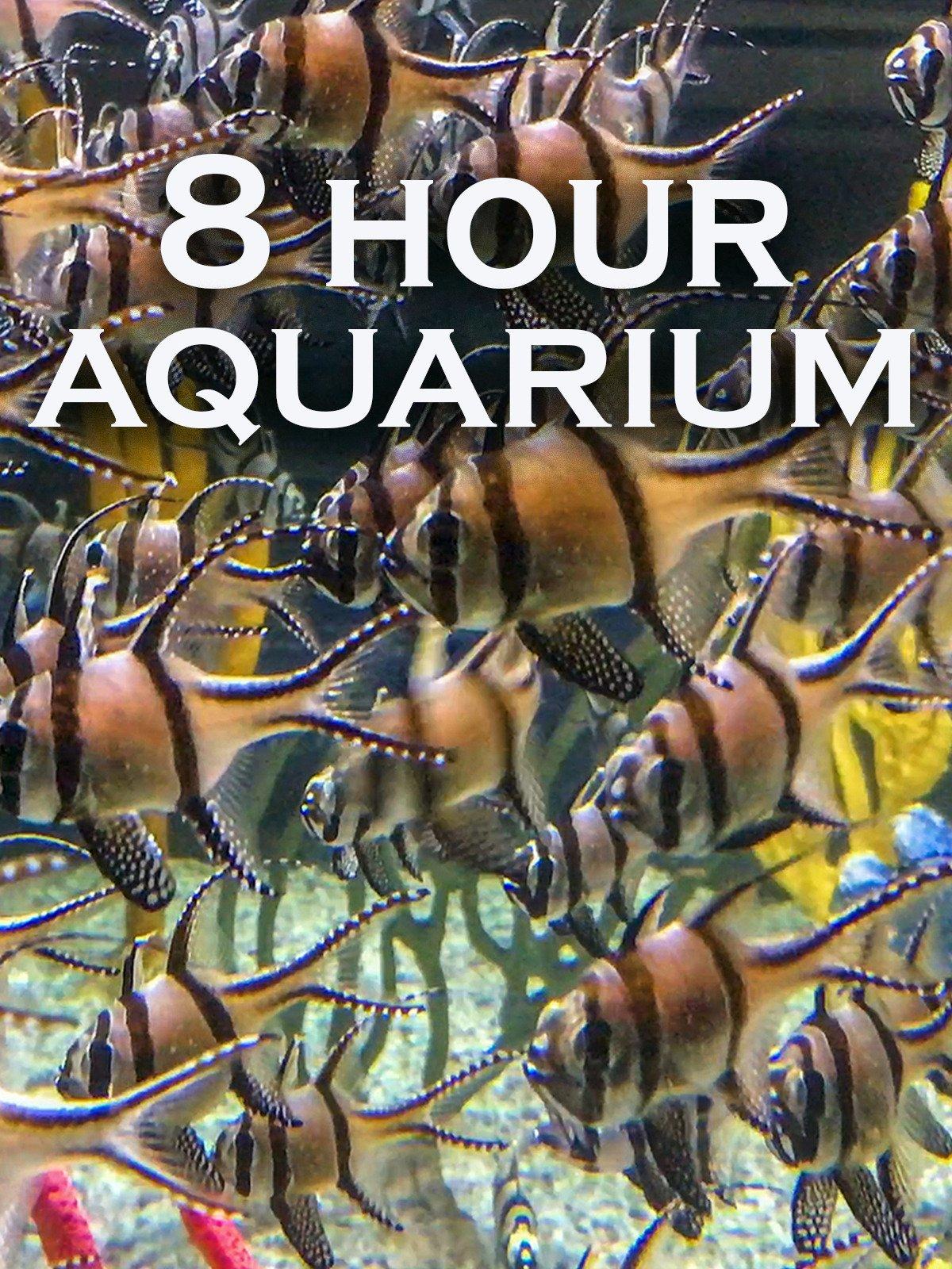 8 Hour Aquarium