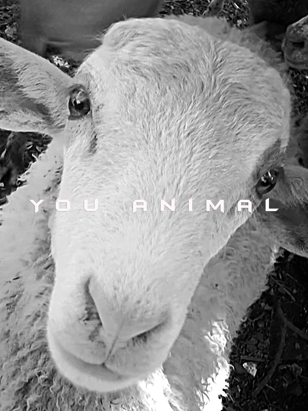 You Animal