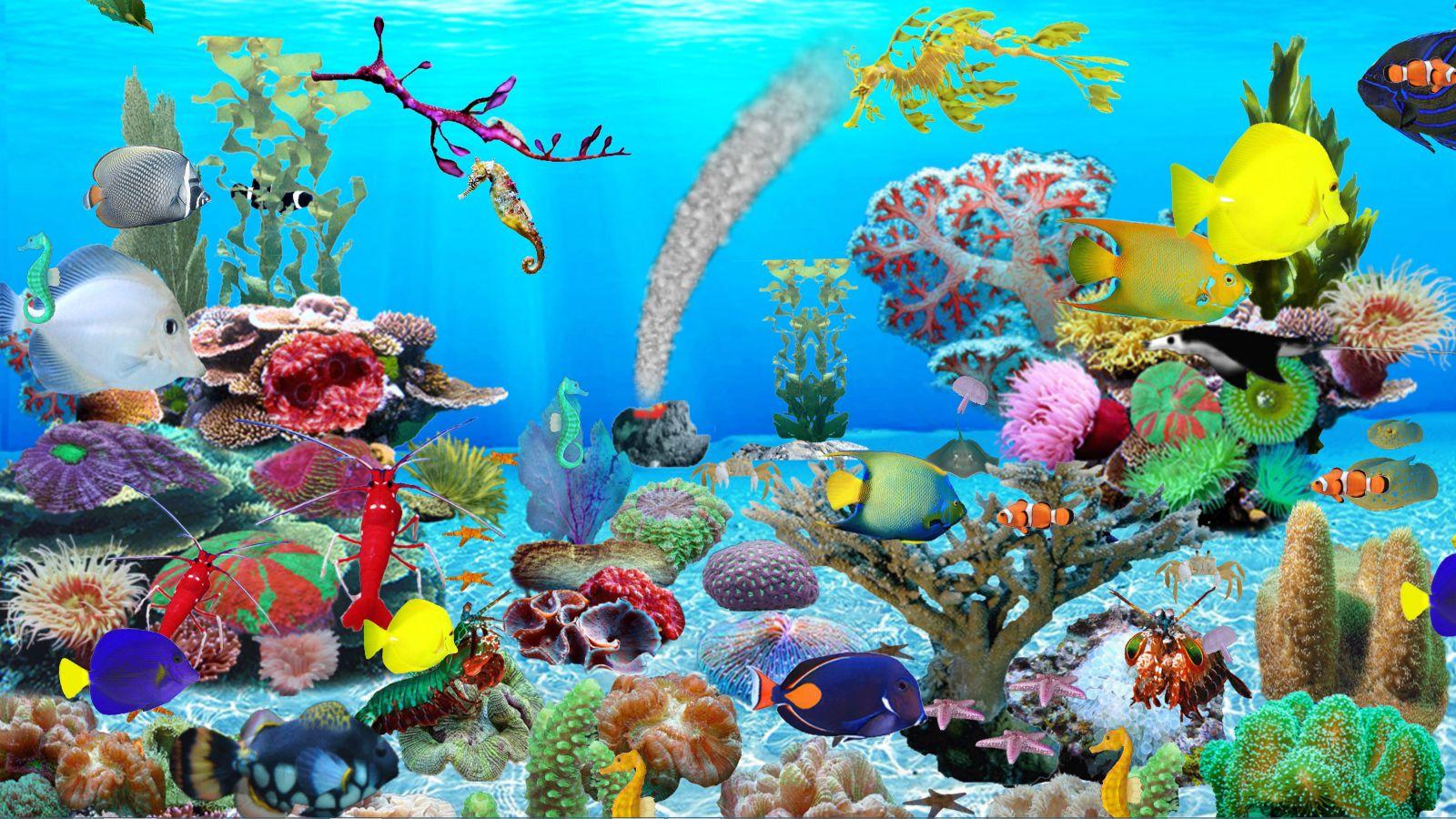 aquarium-bleu-ocean-telechargement