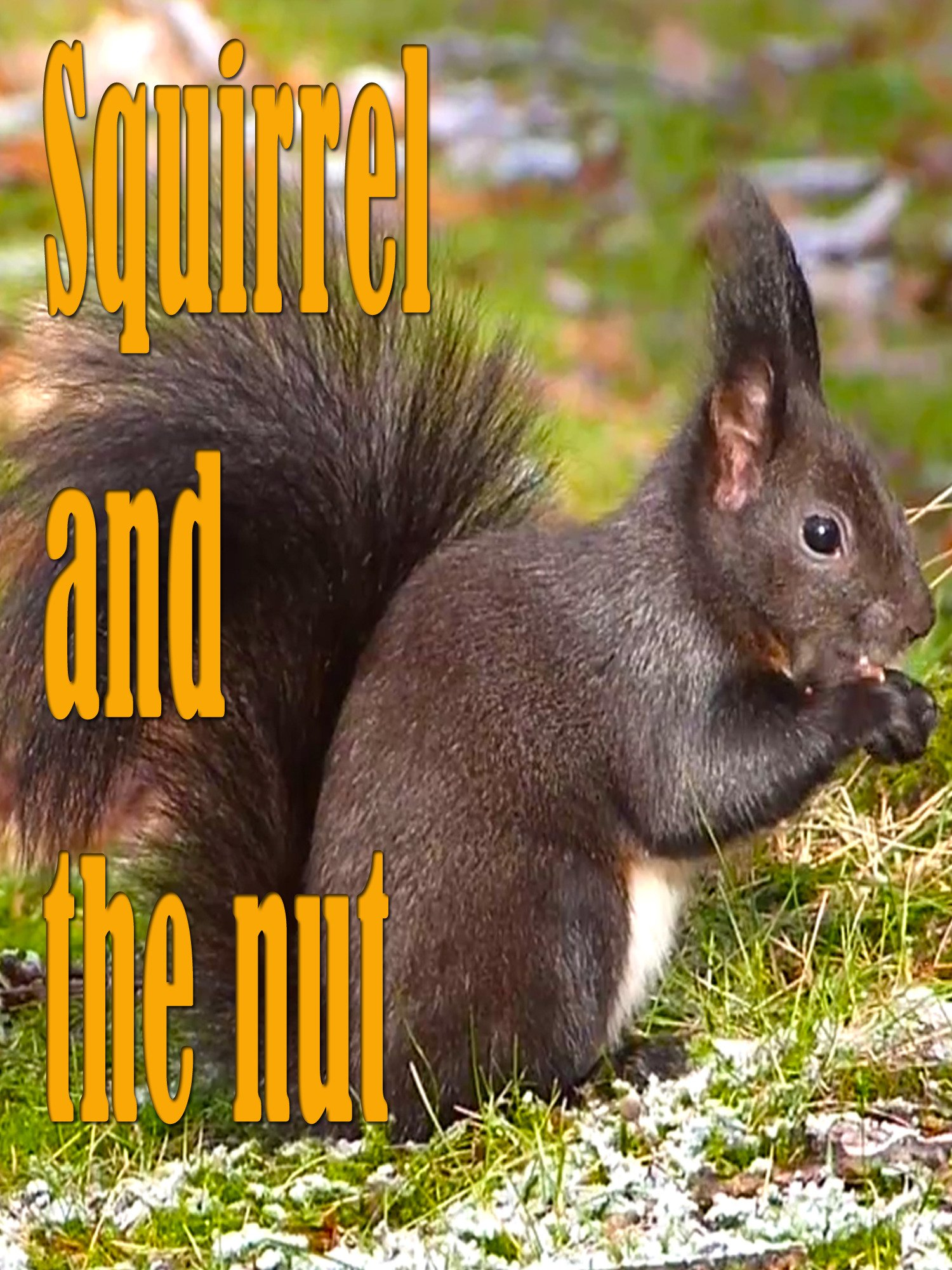 Clip: Squirrel and the nut