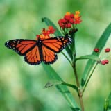 Butterfly Jigsaw Puzzle Game ~ MonkeyPunch