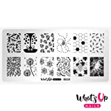 Whats Up Nails - B029 Picnic in the Park Stamping Plate for Nail Art Design (Color: Silver plate, white backing, Tamaño: B029 Picnic in the Park)