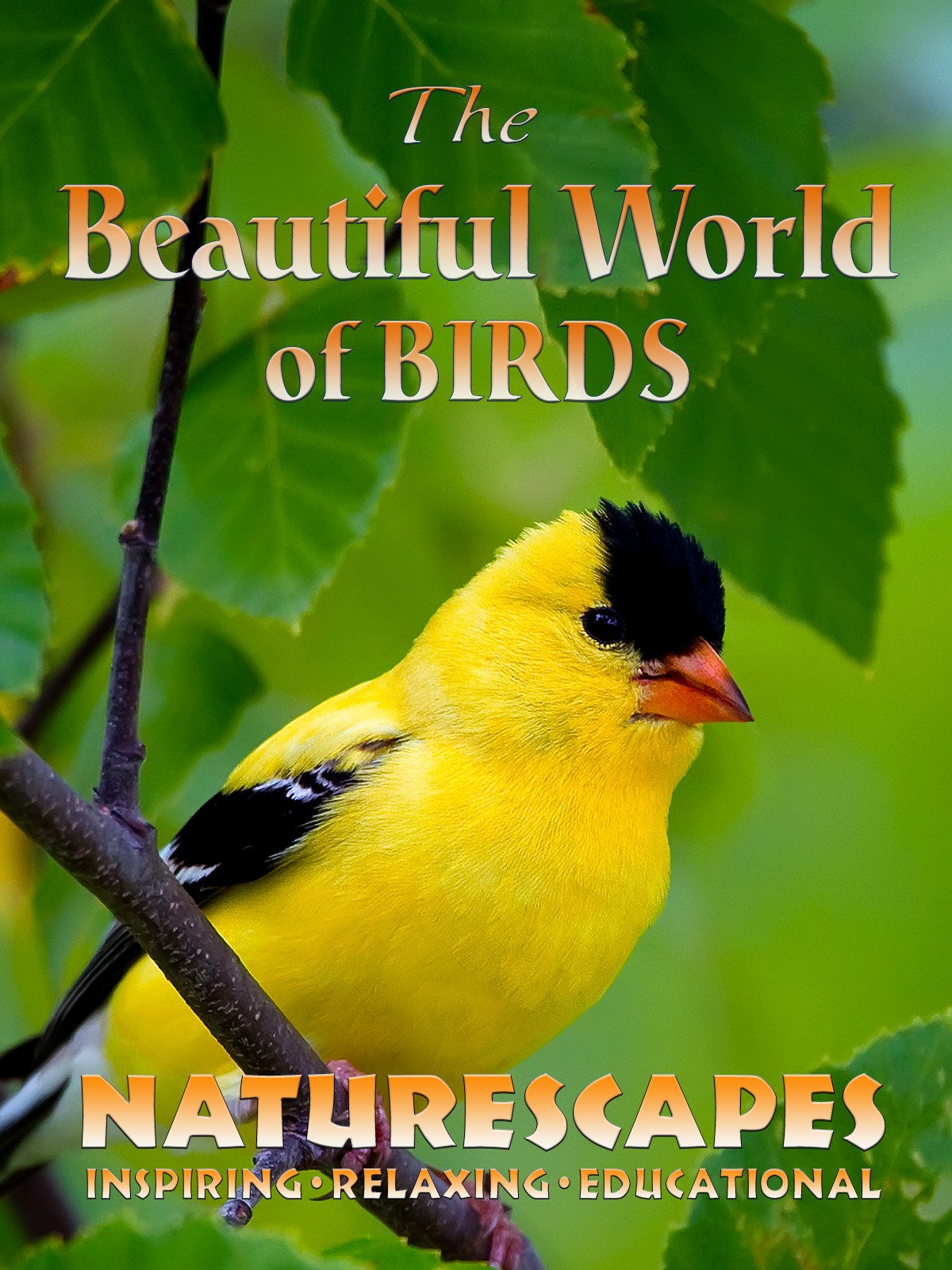 The Beautiful World of Birds