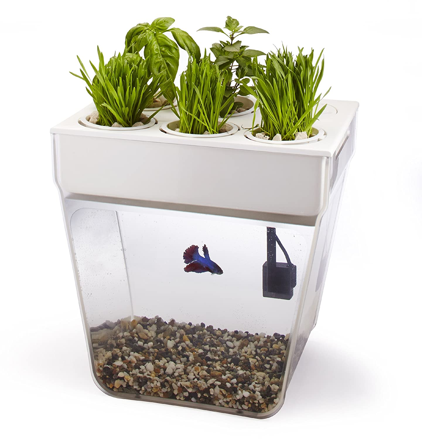 Back to the roots aquafarm self cleaning fish tank that for Clean fish tank
