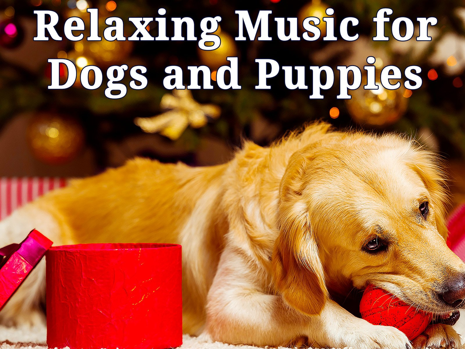 Relaxing Music for Dogs and Puppies