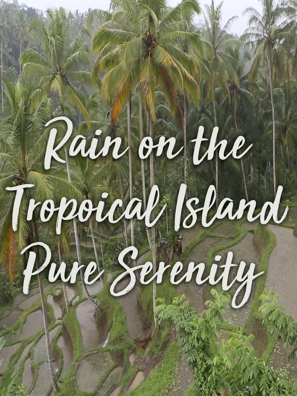 Rain on the Tropical Island Pure Serenity