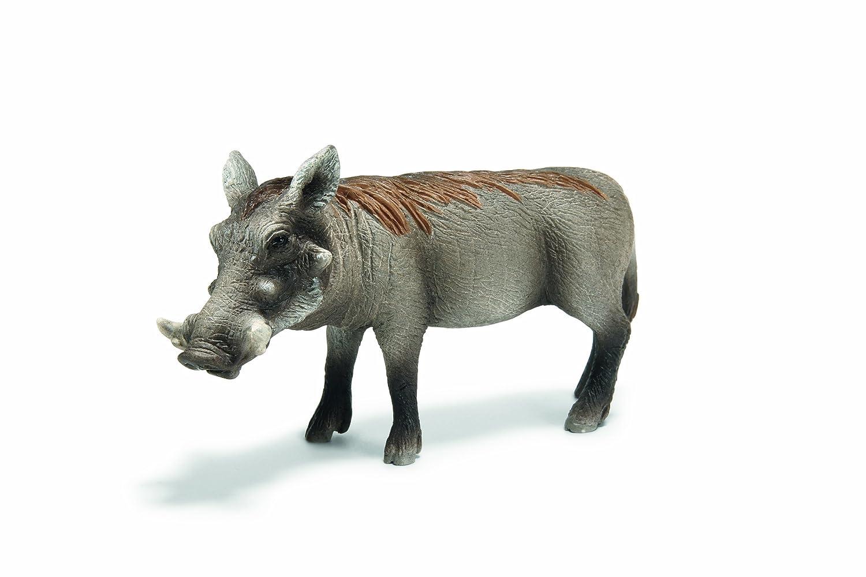 思乐 动物模型