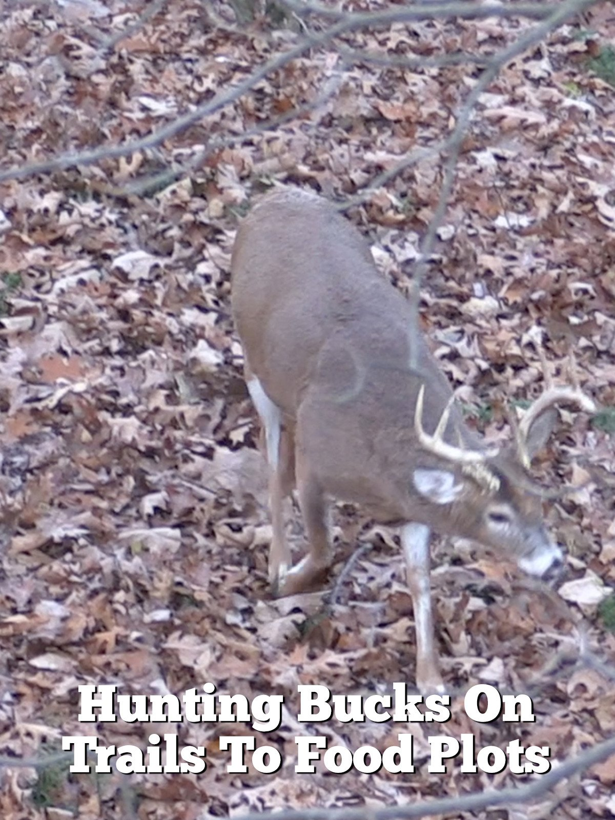 Hunting Bucks On Trails To Food Plots